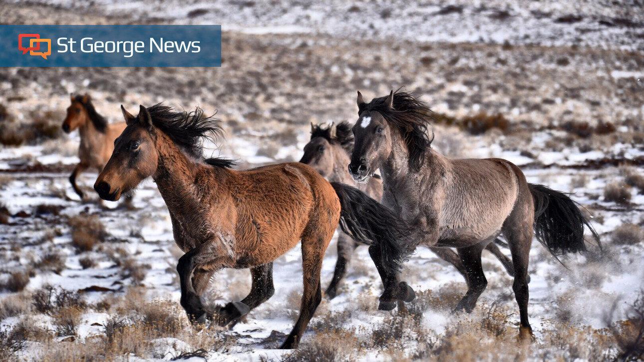 Posterazzi PDDUS45BJY0637LARGE USA 24 x 36 Multi Wild Horse Foals Greeting Photo Print Utah Tooele County