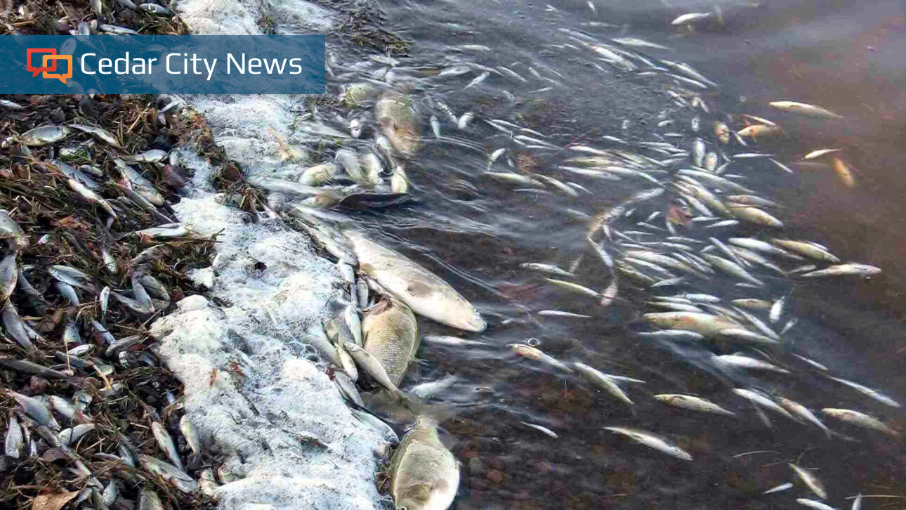 Navajo Lake to undergo rotenone treatment to kill chubs